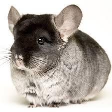 updates to rabbit and chinchilla feed formulation modesto