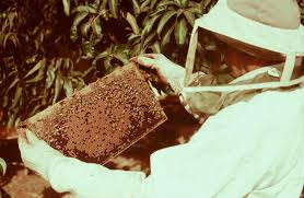 planning and purchasing your beehive perfectbee