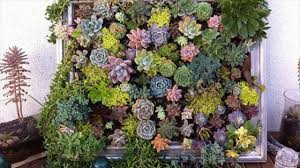 tips to get best results in a window box gardens gardening tips