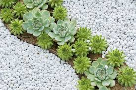 White Rock Garden Rocks And Succulents Rock Garden Rock Gardens Pinterest