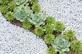 What Is A Rock Garden Cactus Succulent Rock Garden Design Gardening Landscaping I