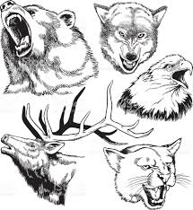 head drawings of wild life stock vector art 472331969 istock