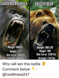 Patient Bear Meme - 25 best memes about grizzly bear grizzly bear memes