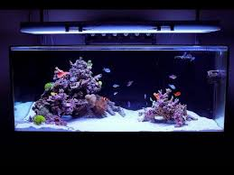 Aquascape Designs Inc Reef Tank Aquascape Design By Fijireefrock Com Youtube