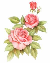 imagenes de rosas vintage flores rosadas de las rosas del vintage aisladas en el fondo blanco