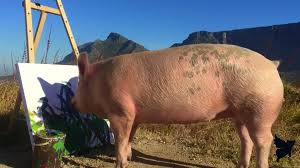 meet pigcasso the painting pig modern farmer