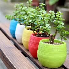 mini plants colourful mini flower pot for succulent plants round plastic plant