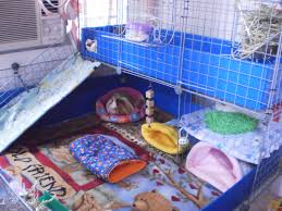 Guinea Pig Cages Cheap Housing