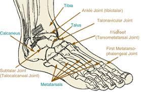 Foot Ligament Anatomy Coc