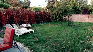 backyard renovation tv shows crashers hgtv yard decorations