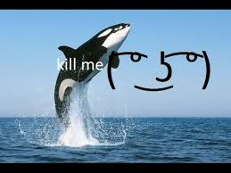 Whale Meme - the spicy meme girls feat dj w h a l e youtube