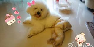 Pantyhose Meme - dogs wearing pantyhose meme 21 dump a day