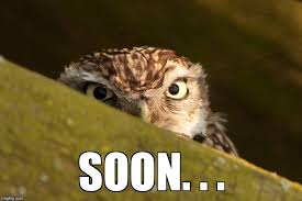 Soon Meme - image tagged in soon owls funny imgflip