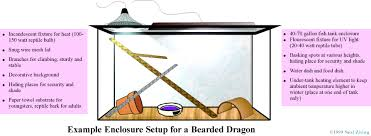 bearded dragon lighting guide sidney s bearded dragon care tips