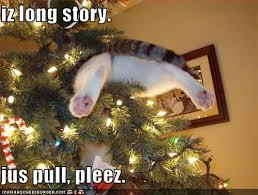 Funny Christmas Cat Memes - funny christmas cat memes 28 images tag for cute cat memes about