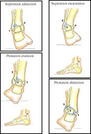 Anterior Tibiofibular Ligament Injury Lauge Hansen Classification Trauma Mechanism Of Ankle Fractures