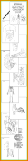 best 25 human body diagram ideas on pinterest the human body