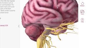 Anatomy And Physiology Apps A Walkthrough Of Anatomy U0026 Physiology 4 With Robb Kneebone