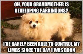 Pomeranian Meme - bitter about the advent of agriculture pomeranian memes quickmeme