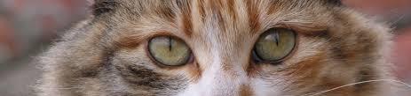 cats u0026 kittens dspca