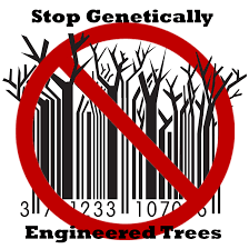 open letter to ctnbio to reject ge trees in brazil global