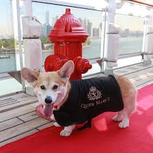 all aboard the queen mary 2 for best in show dog winner sandy