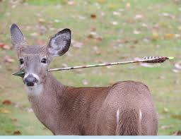 New Jersey wildlife images Update new jersey wildlife officials search for deer with arrow jpg