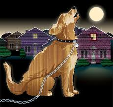 afghan hound attack la plata county adopts barking dog animal neglect rules