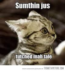 Scared Cat Meme - 31 very funny scared images and photos
