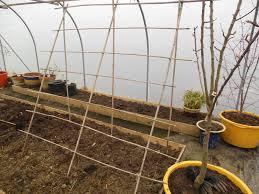 the tenacious gardener cucumber trellis