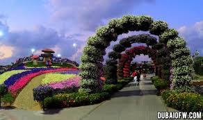 dubai miracle garden photos review location video tickets