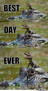 Alligator Meme - alligators memes best collection of funny alligators pictures
