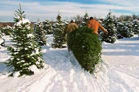 where to cut down your own christmas tree in the north country 5