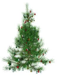 christmas tree png 31874 free icons and png backgrounds