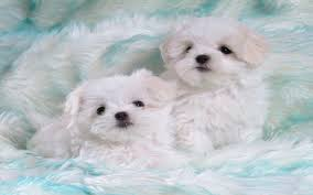 cute dog wallpapers cute puppy wallpapers on kubipet com
