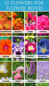 best 25 balcony flower box ideas on pinterest outdoor flower