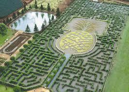 bureau vall dole dole plantation in oahu thousand wonders