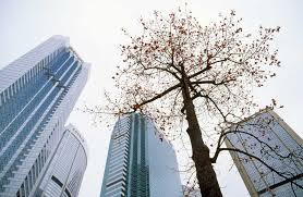 photographs by stubbs hong kong tree in the city