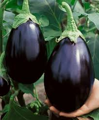 amazon com black beauty eggplant seeds solanum melongena 0 5