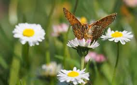 butterfly flower images pixabay free pictures