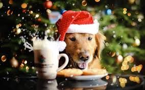 pet christmas wallpaper hd android apps on play