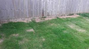 completely new to gardening what to do with my garden help and