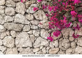 wall flowers puzzlepix