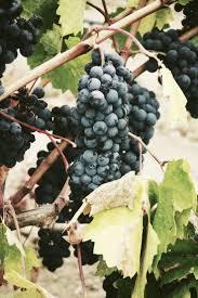110 best just fruit images on pinterest fruit hardy kiwi and