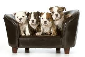 canap pour chien grande taille mousse chien grand modele