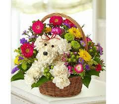 flower shop send puppy of flowers in winston salem nc sherwood flower
