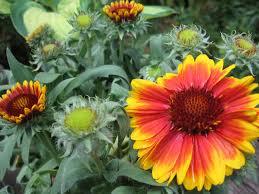flowers plants and shrubs that grow well in full sun garden