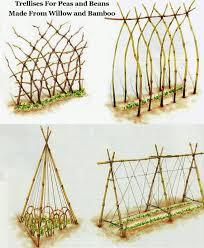 Willow Trellis How To Build A Trellis For Growing Peas Diy Trellis Trellis