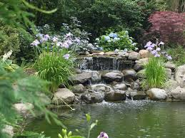 backyard koi ponds and water gardens as modern homes flora for