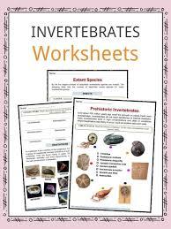 free printable worksheets vertebrates invertebrates invertebrate facts worksheets types specie information for kids